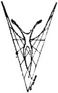 CLMC_logo jpeg