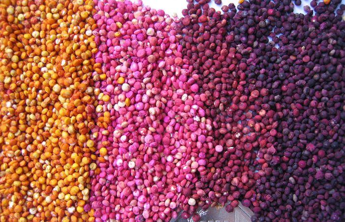 Colored_quinoa