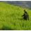 Ecuador, Chevron dovrà risarcire 9 miliardi per la deforestazione dell'Amazzonia