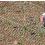COME L'AGRICOLTURA BIOLOGICA PUO' SALVARE LA BIODIVERSITA'