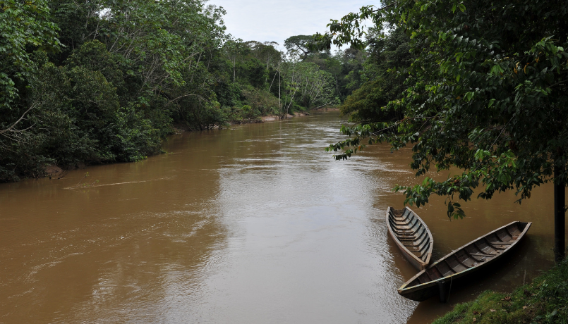 foresta amazzonia