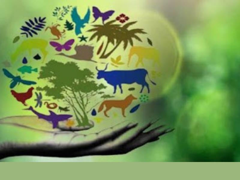Nuovo Rapporto sulla perdita senza precedenti della biodiversità e la  conversione ecologica – FOCSIV